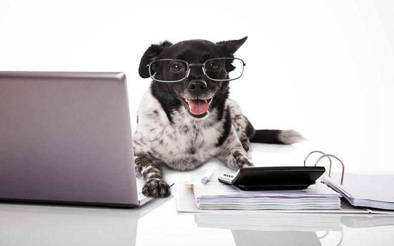 quel-budget-prevoir-quand-on-a-un-chien