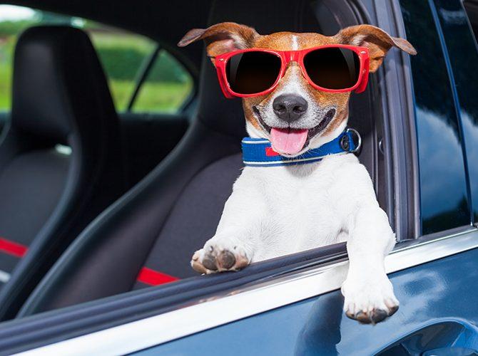 pourquoi-ne-jamais-laisser-son-chien-monter-a-l-avant-du-vehicule