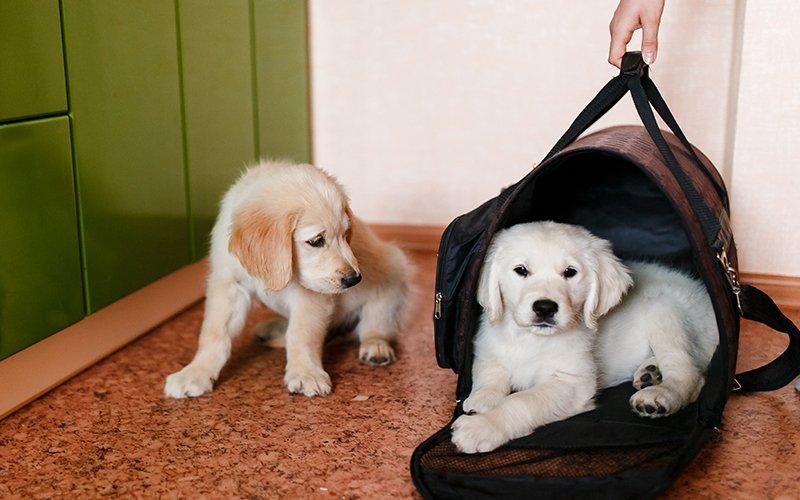 prendre-avion-avec-son-chien-pas-si-complique